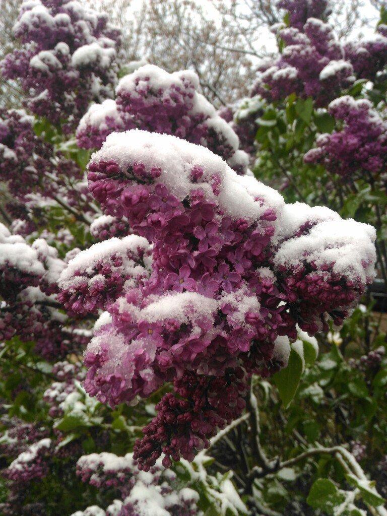 В Крым неожиданно вернулась зима: в Симферополе выпал снег (ФОТО), фото-3