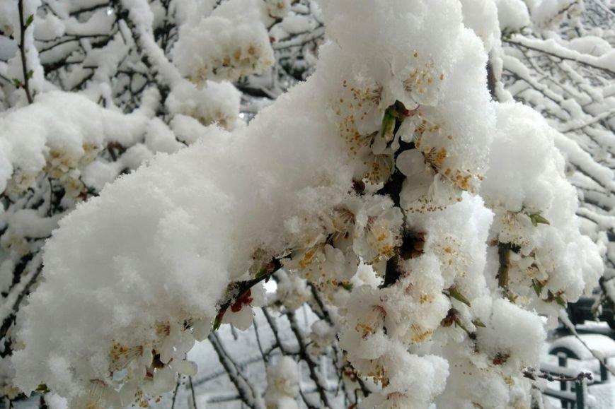 Весна вернётся в Белгород не раньше следующей недели, фото-1