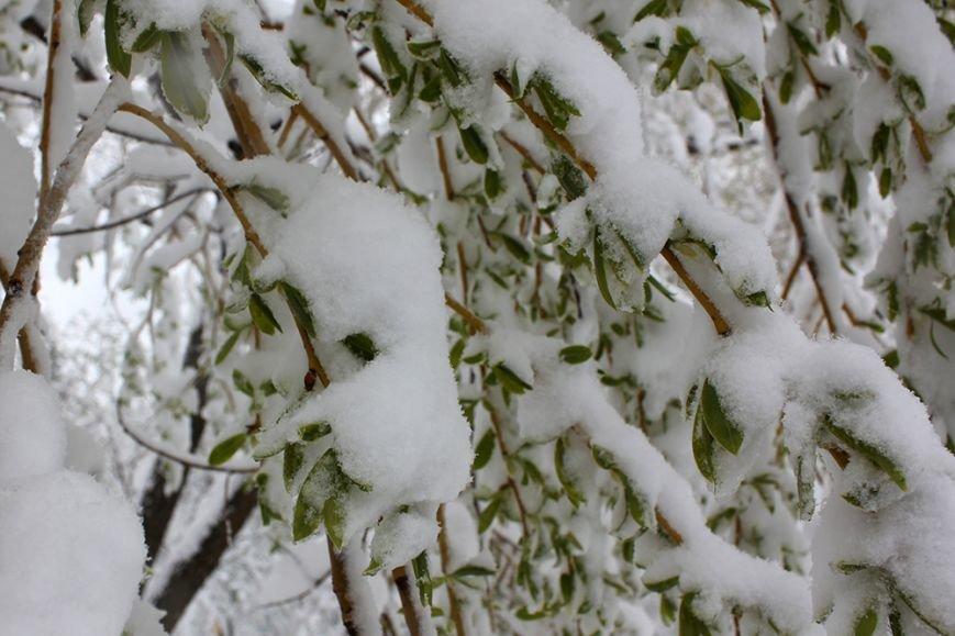Весна вернётся в Белгород не раньше следующей недели, фото-6