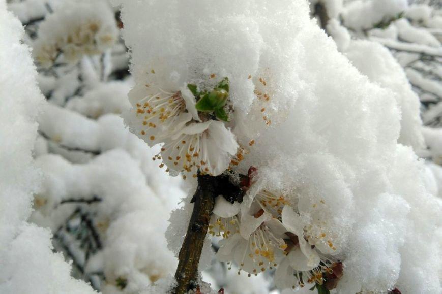 Весна вернётся в Белгород не раньше следующей недели, фото-7