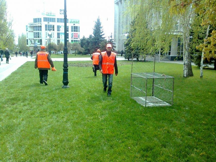 В Херсоне перед зданием горсовета ловят и сажают в клетку собак (фото), фото-1