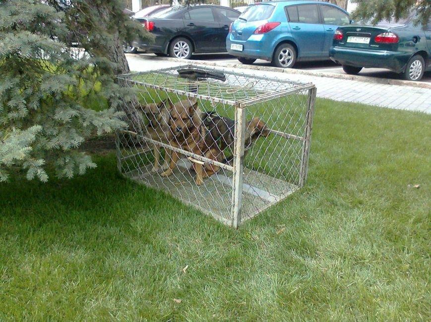 В Херсоне перед зданием горсовета ловят и сажают в клетку собак (фото), фото-2