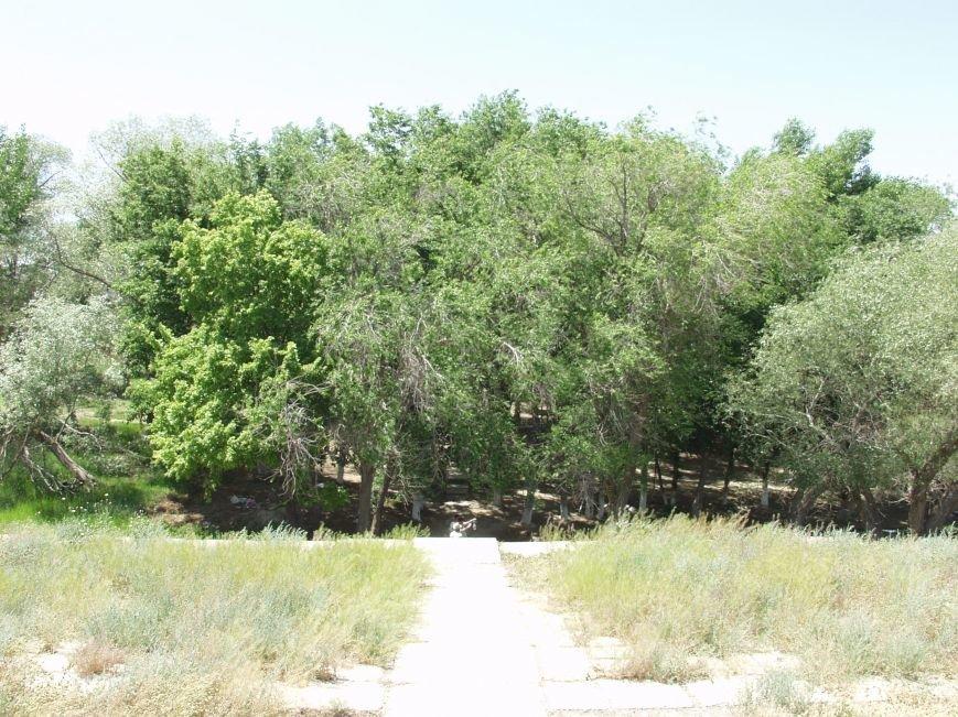 Акмыш,роща из деревьев,спуск в оазис