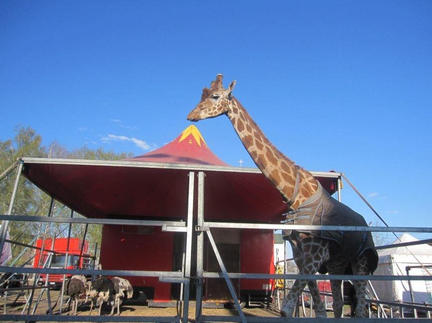 """Поради для конотопців, котрі планують відвідати цирк """"Кобзов"""", фото-4"""