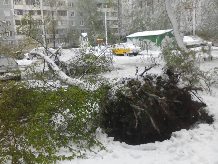 На Днепропетровщине рухнувшее дерево убило женщину, фото-17