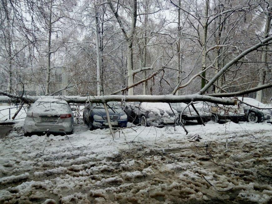 На Днепропетровщине рухнувшее дерево убило женщину, фото-14