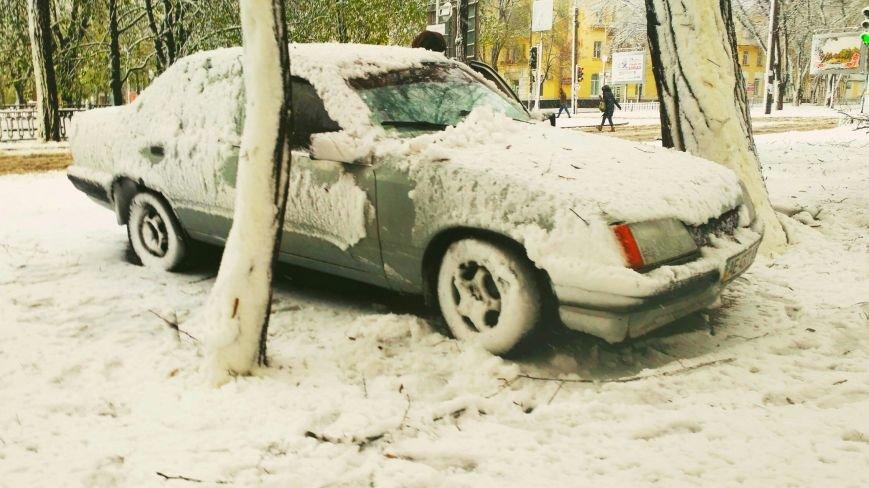 На Днепропетровщине рухнувшее дерево убило женщину, фото-4