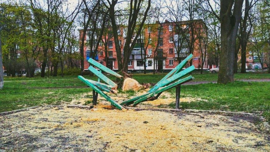 На Днепропетровщине рухнувшее дерево убило женщину, фото-7