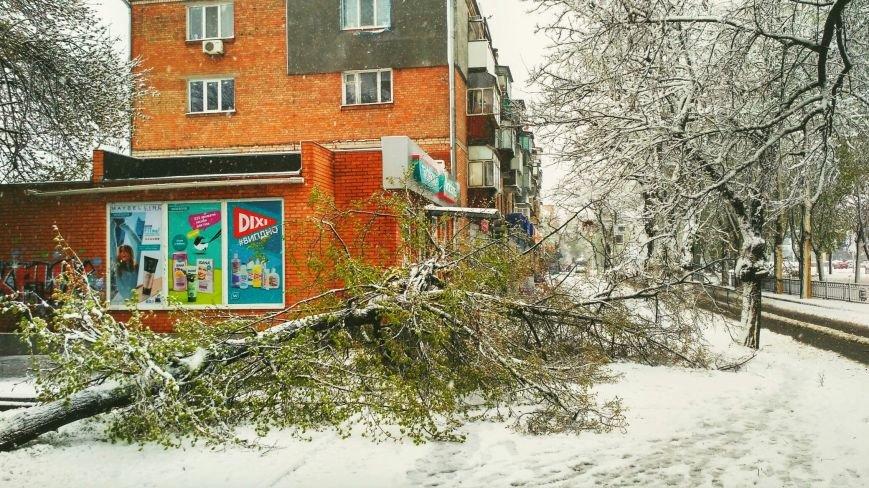 На Днепропетровщине рухнувшее дерево убило женщину, фото-1