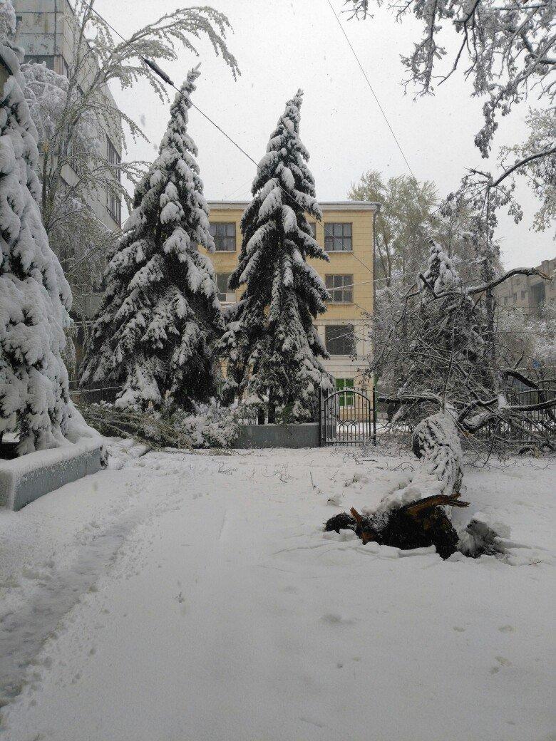 На Днепропетровщине рухнувшее дерево убило женщину, фото-11
