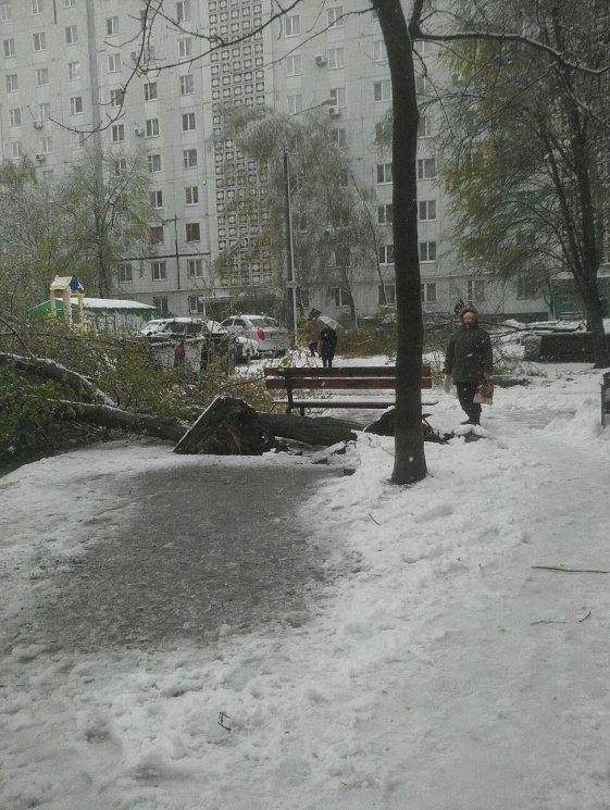 На Днепропетровщине рухнувшее дерево убило женщину, фото-18