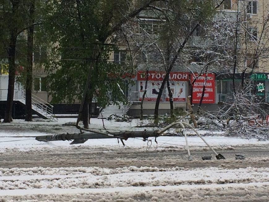 На Днепропетровщине рухнувшее дерево убило женщину, фото-8