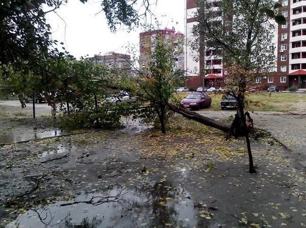 На Днепропетровщине рухнувшее дерево убило женщину, фото-20