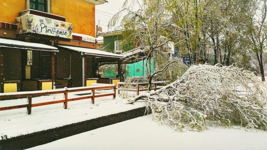 На Днепропетровщине рухнувшее дерево убило женщину, фото-3