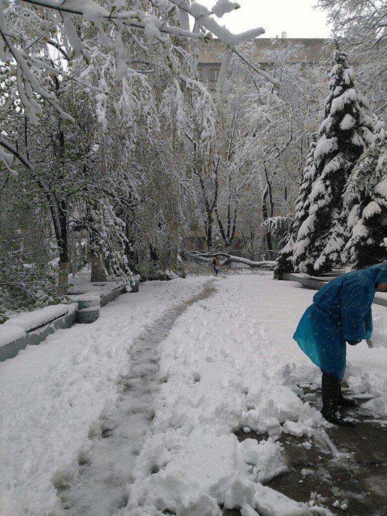 На Днепропетровщине рухнувшее дерево убило женщину, фото-10