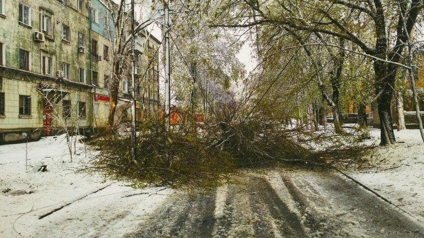 На Днепропетровщине рухнувшее дерево убило женщину, фото-5