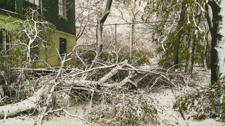 На Днепропетровщине рухнувшее дерево убило женщину, фото-6