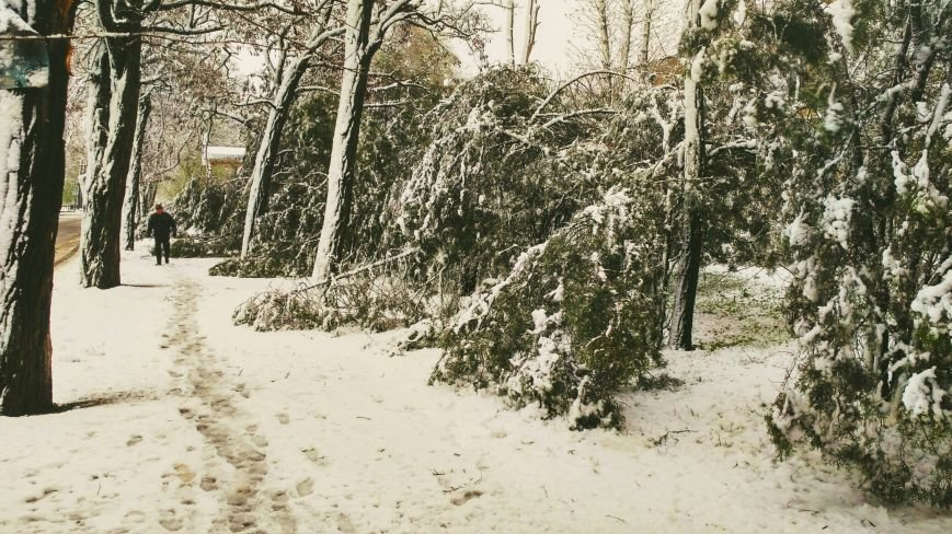 На Днепропетровщине рухнувшее дерево убило женщину, фото-2