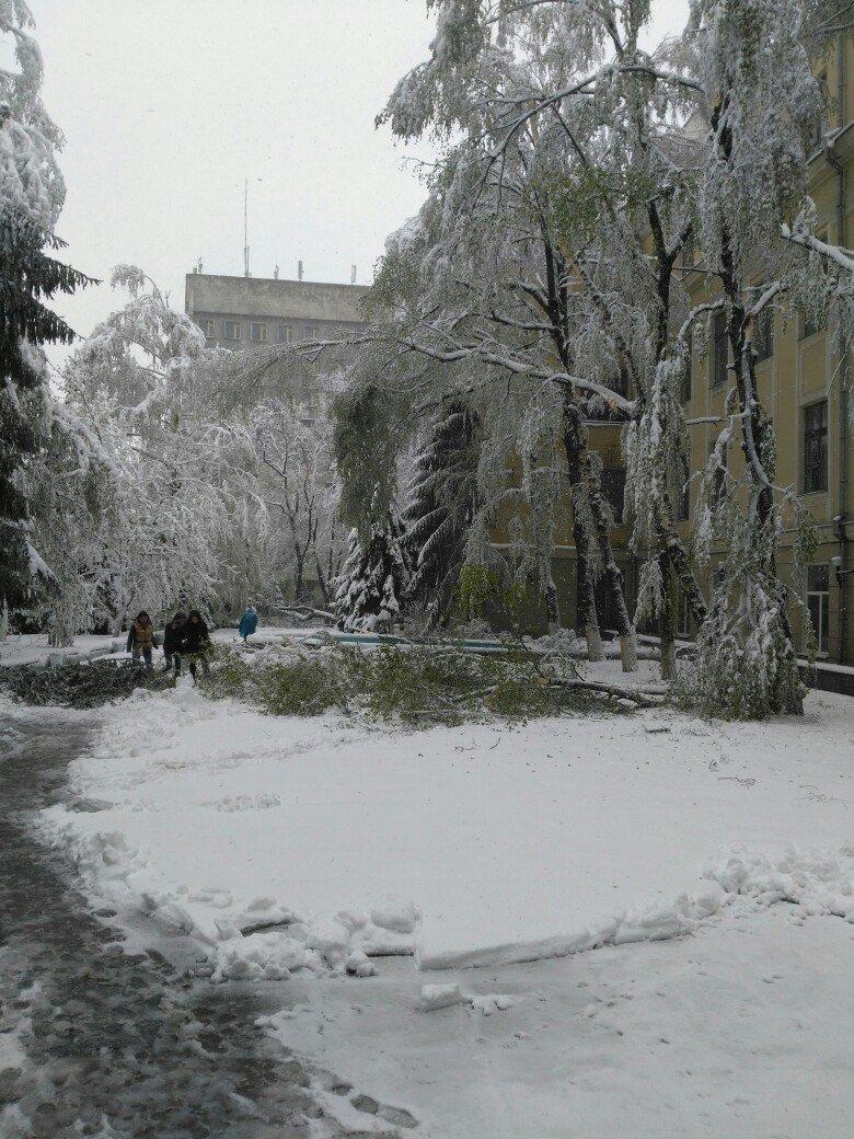 На Днепропетровщине рухнувшее дерево убило женщину, фото-12