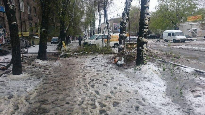 На Днепропетровщине рухнувшее дерево убило женщину, фото-19