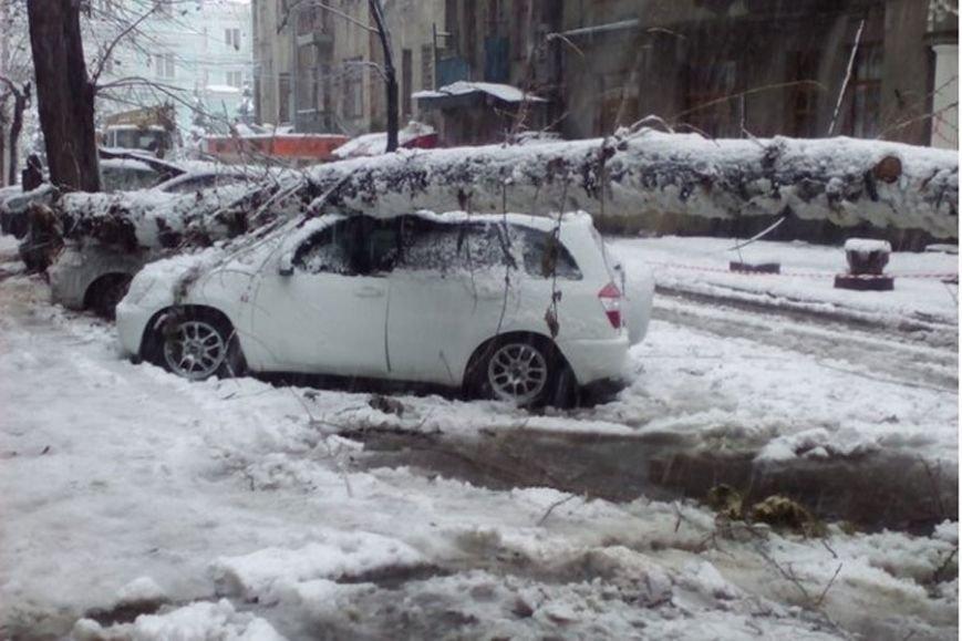 На Днепропетровщине рухнувшее дерево убило женщину, фото-15