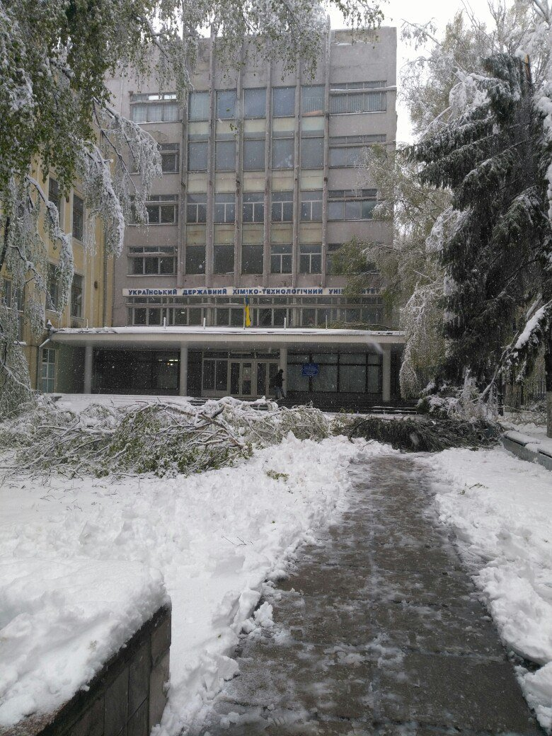 На Днепропетровщине рухнувшее дерево убило женщину, фото-9