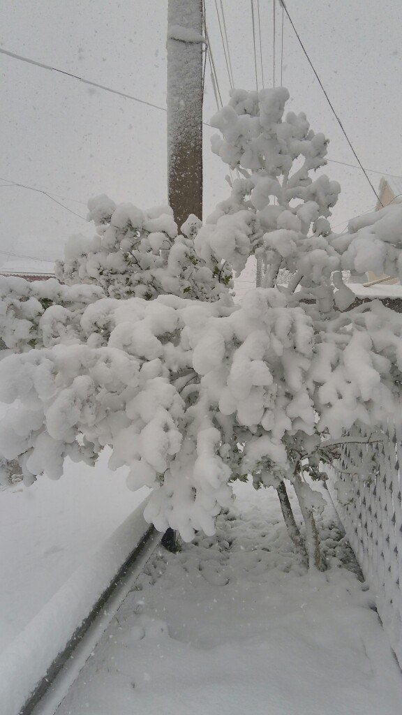 13,5 сантиметров, я в шоке! Девушка измерила ...снежный покров в Одесской области (ВИДЕО), фото-1