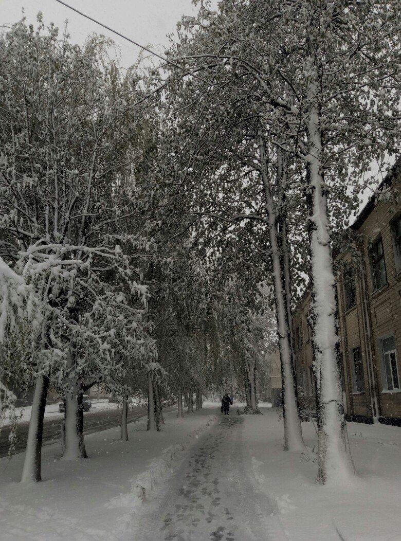 13,5 сантиметров, я в шоке! Девушка измерила ...снежный покров в Одесской области (ВИДЕО), фото-14