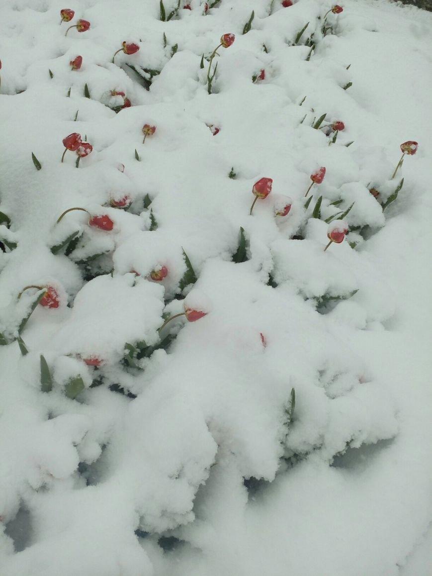 13,5 сантиметров, я в шоке! Девушка измерила ...снежный покров в Одесской области (ВИДЕО), фото-7