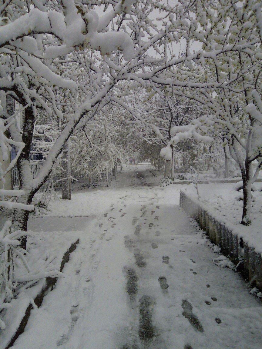 13,5 сантиметров, я в шоке! Девушка измерила ...снежный покров в Одесской области (ВИДЕО), фото-3