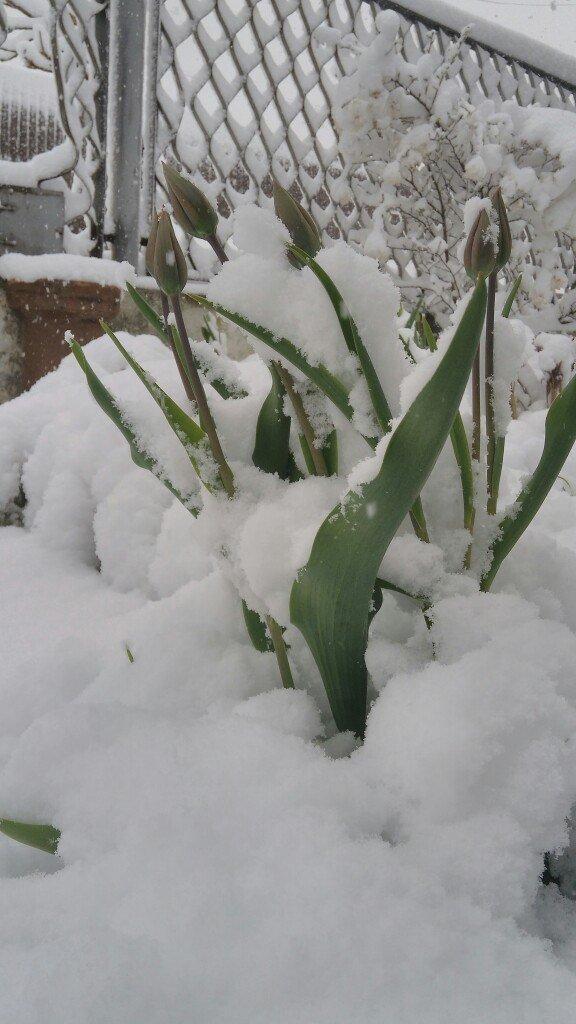 13,5 сантиметров, я в шоке! Девушка измерила ...снежный покров в Одесской области (ВИДЕО), фото-4