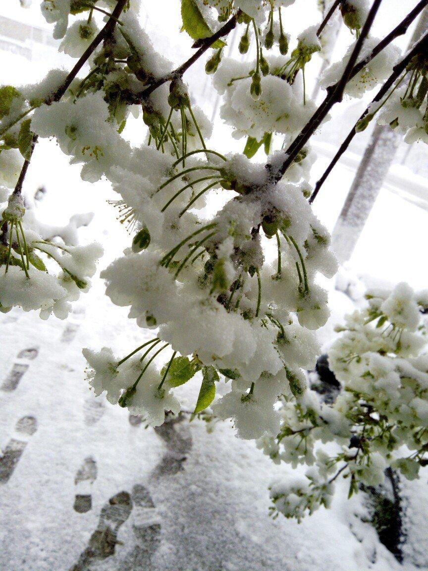 13,5 сантиметров, я в шоке! Девушка измерила ...снежный покров в Одесской области (ВИДЕО), фото-9