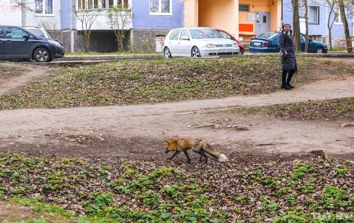 grodno_lisa_rumlevskiy_park_3_
