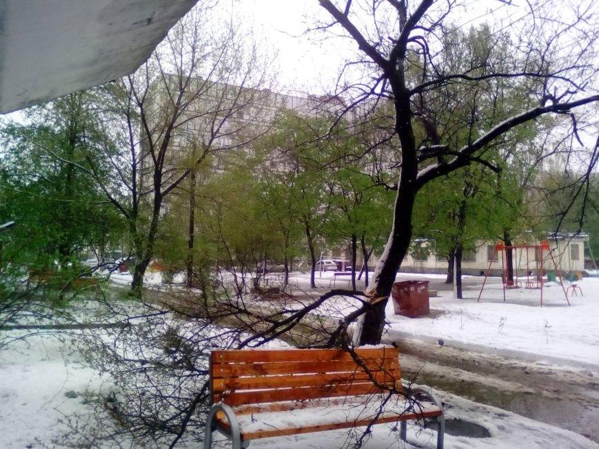 Цветы под снегом, или Зима весной: какое оно, 21 апреля, в разных городах Украины (ФОТОРЕПОРТАЖ+КАРТА), фото-2