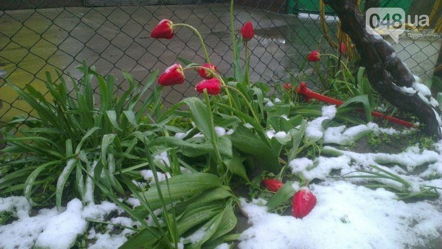 Цветы под снегом, или Зима весной: какое оно, 21 апреля, в разных городах Украины (ФОТОРЕПОРТАЖ+КАРТА), фото-14