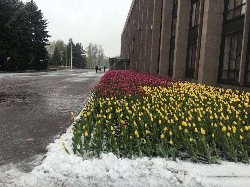 Цветы под снегом, или Зима весной: какое оно, 21 апреля, в разных городах Украины (ФОТОРЕПОРТАЖ+КАРТА), фото-7