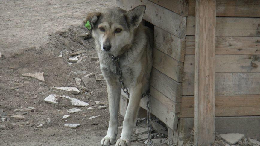 Проблеми функціонування притулку для бездомних тварин у Новограді-Волинському (ВІДЕО), фото-2