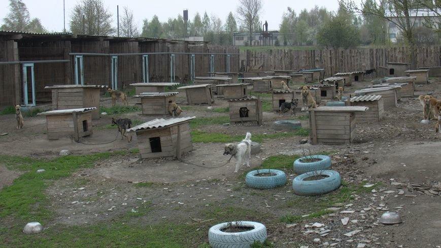 Проблеми функціонування притулку для бездомних тварин у Новограді-Волинському (ВІДЕО), фото-1