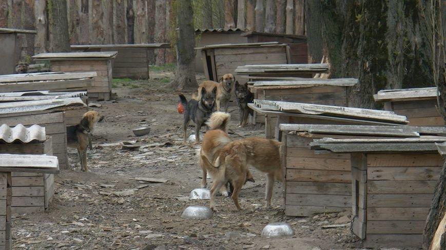 Проблеми функціонування притулку для бездомних тварин у Новограді-Волинському (ВІДЕО), фото-4