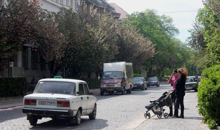 Візитівкою Ужгорода вважають сакури і дороги: опитування, фото-1