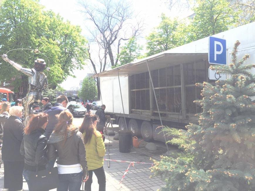 В центре Симферополя разгуливали полосатые хищники (ФОТОФАКТ, обновлено), фото-4