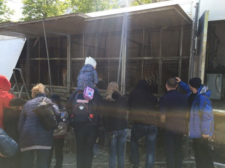 В центре Симферополя разгуливали полосатые хищники (ФОТОФАКТ, обновлено), фото-3