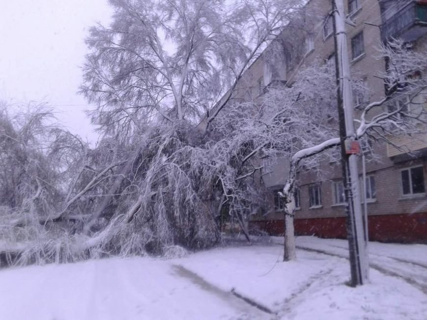 Новомосковск 0569 дерево