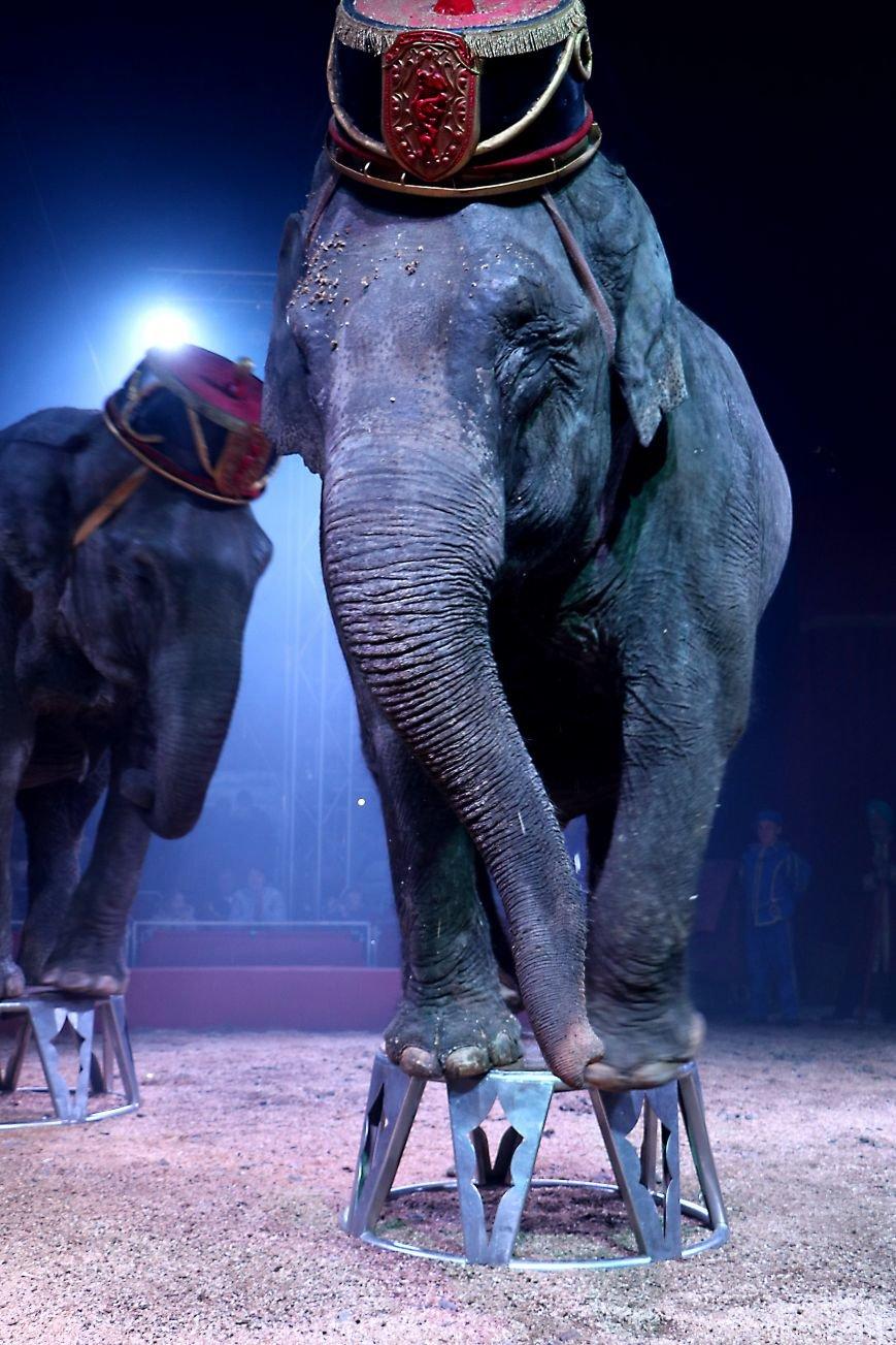 Итальянский цирк поражал мариупольцев слонами, тиграми и мужским акробатическим шоу (ФОТО, ВИДЕО), фото-14