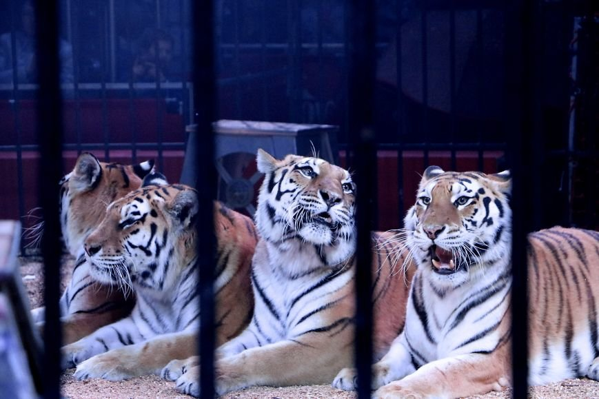 Итальянский цирк поражал мариупольцев слонами, тиграми и мужским акробатическим шоу (ФОТО, ВИДЕО), фото-12