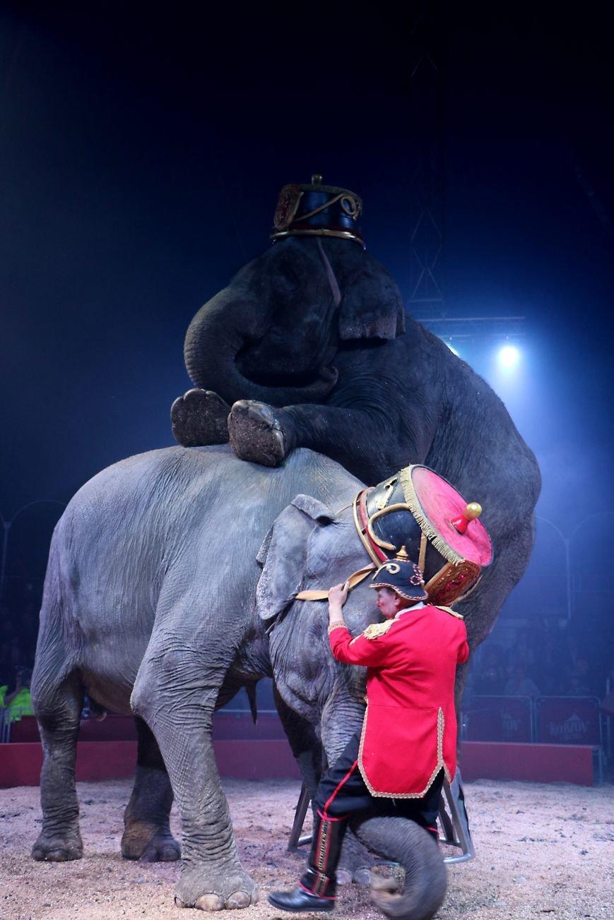 Итальянский цирк поражал мариупольцев слонами, тиграми и мужским акробатическим шоу (ФОТО, ВИДЕО), фото-11
