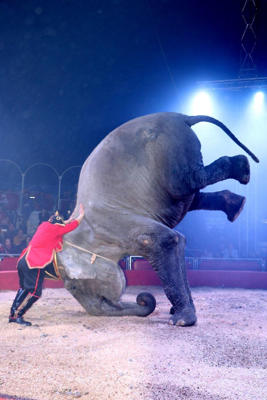 Итальянский цирк поражал мариупольцев слонами, тиграми и мужским акробатическим шоу (ФОТО, ВИДЕО), фото-15
