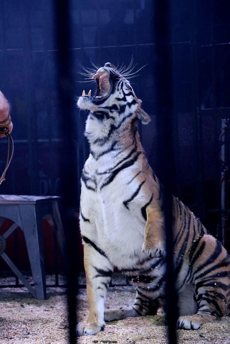 Итальянский цирк поражал мариупольцев слонами, тиграми и мужским акробатическим шоу (ФОТО, ВИДЕО), фото-13