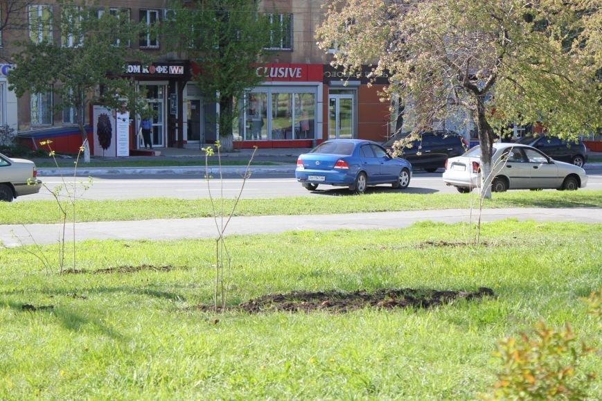 В Мариуполе молодожены высадили калину (ФОТО), фото-5