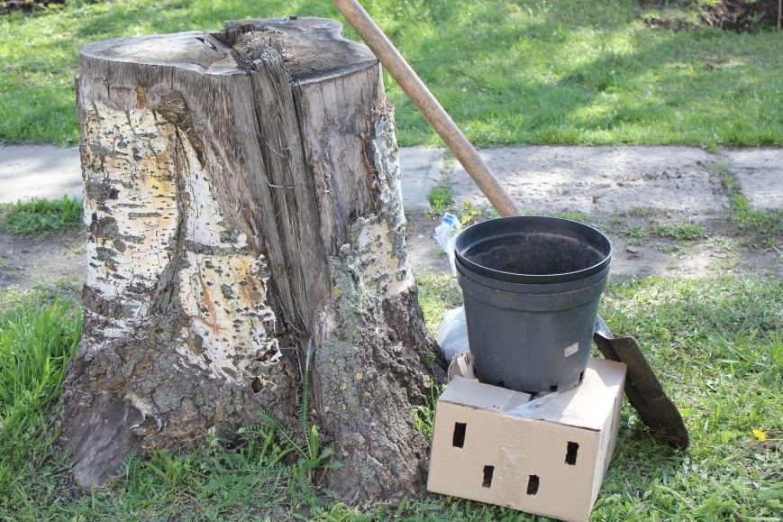 В Мариуполе молодожены высадили калину (ФОТО), фото-3